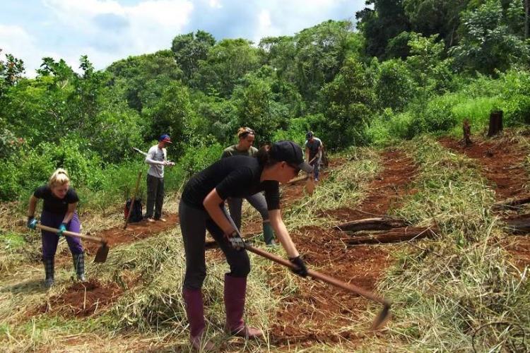 Volunteers farming
