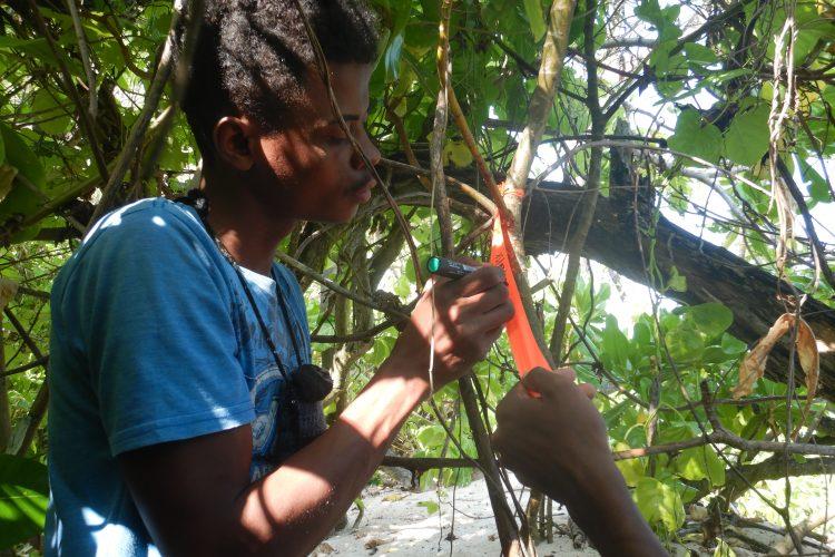 Volunteers marking turtle nest
