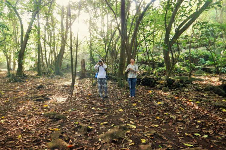 Volunteers monitoring Seychelles Magpie robins