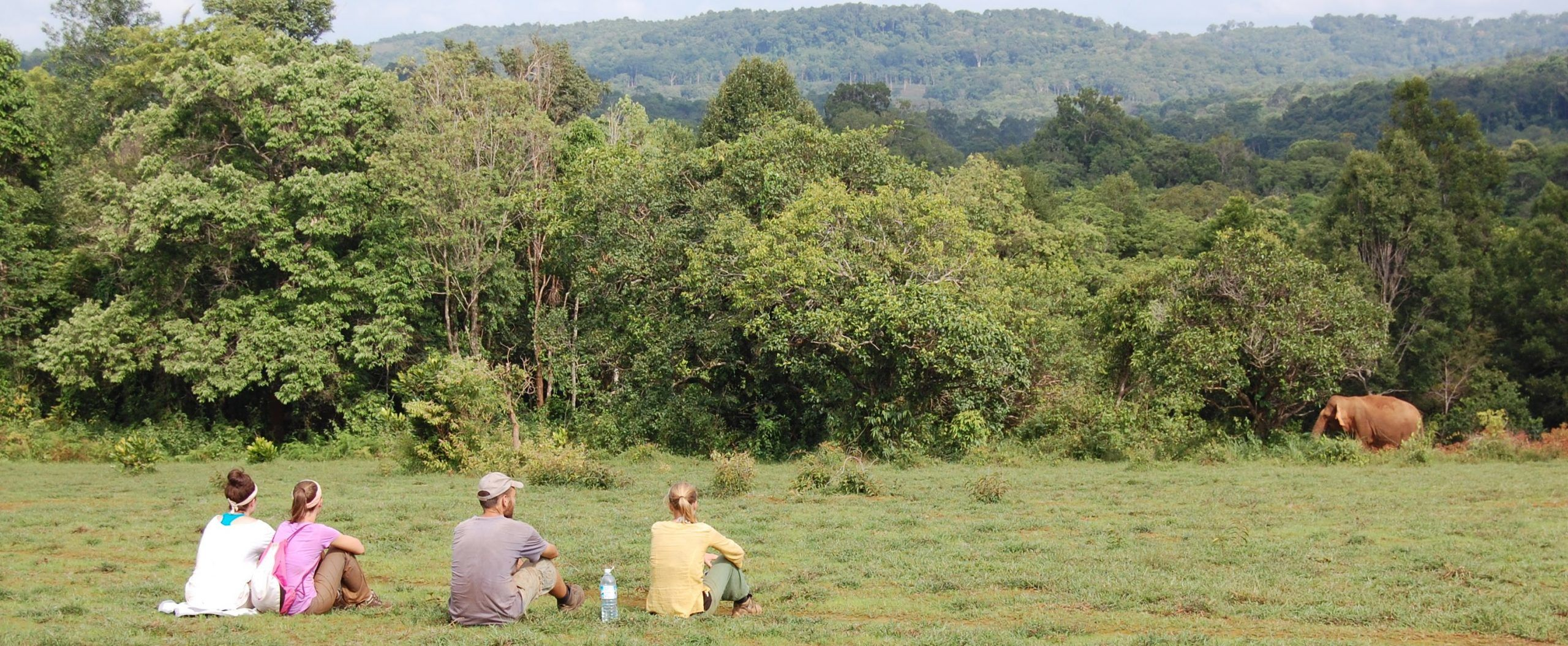 Volunteers observing elephants