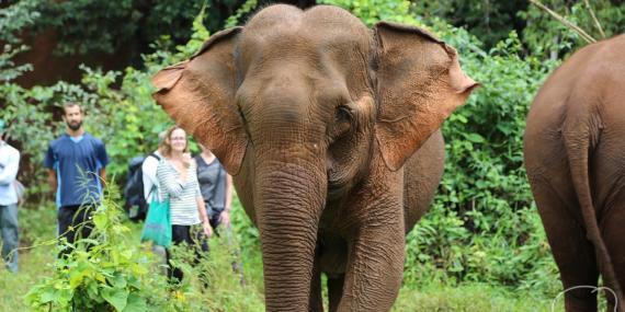 Elephant Volunteer | Volunteer in Cambodia | WorkingAbroad