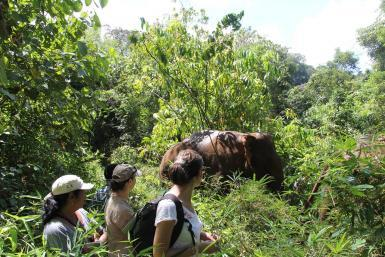 alttagVolunteer with Elephants   Volunteer Cambodia   Working Abroad