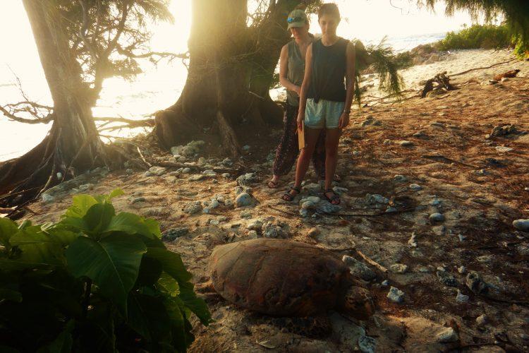 Volunteers observing sea turtle