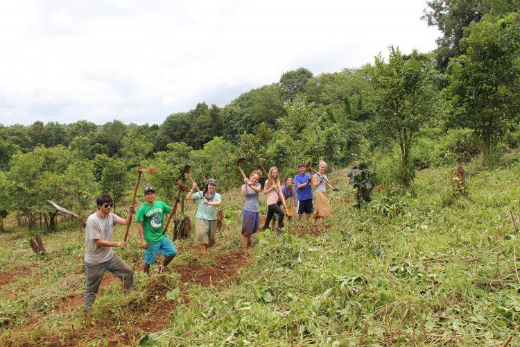 Volunteers working in field