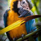 Amazon Photography Internship Programme, Peru