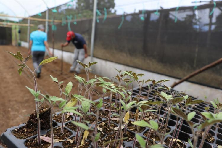 Agriculture project in Galapagos