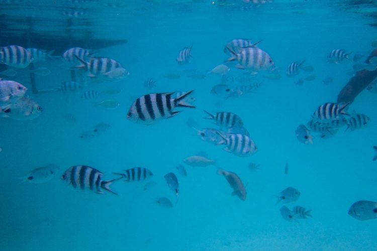 Underwater shot of fish in lagoon