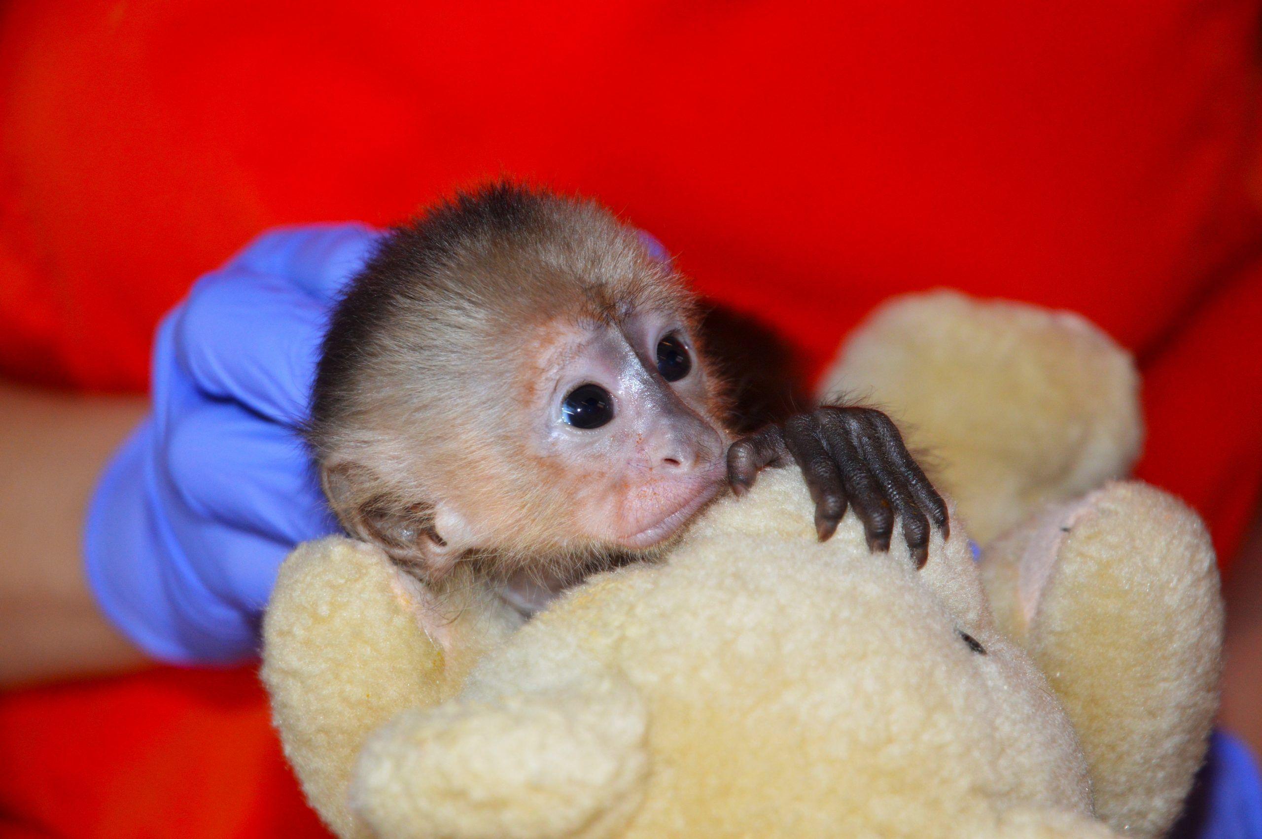Wildlife Rescue Primatology Field Course, Costa Rica