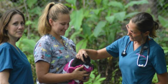 Baby howler monkey with volunteer and staff