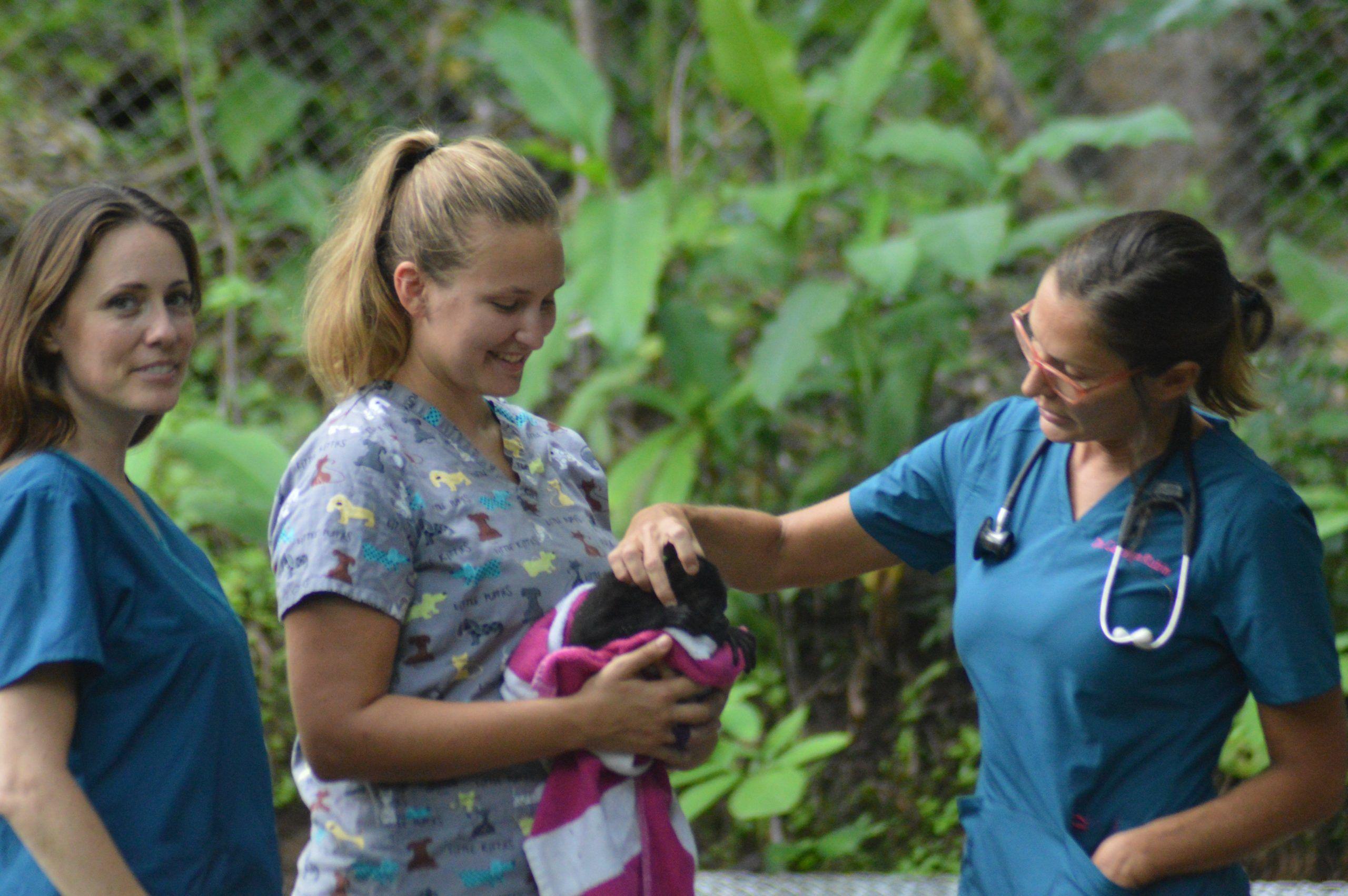 Wildlife Rescue Field Research Crash Course, Costa Rica
