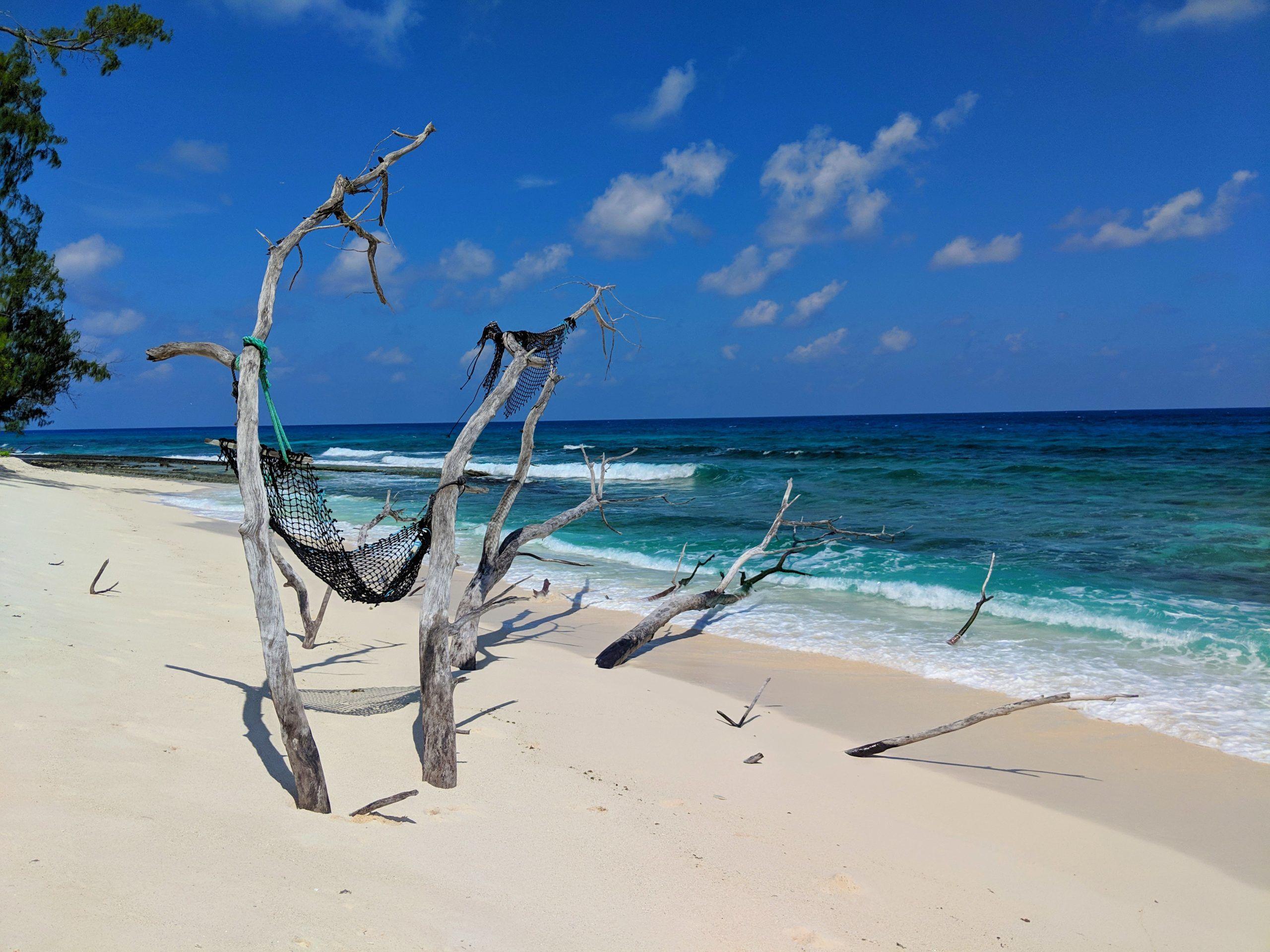 Seychelles Island Conservation Volunteer Programme