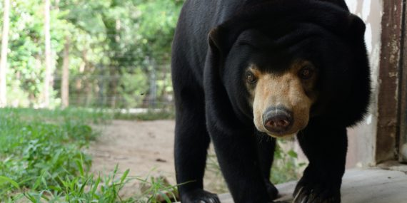 Volunteer with Bears | Volunteer Cambodia | WorkingAbroad