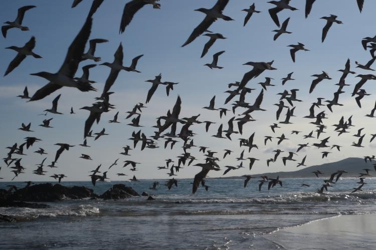Birds flying in Galapagos