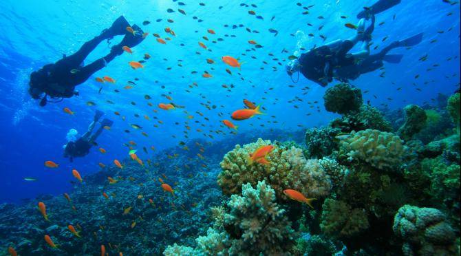 Diving in Carriacou