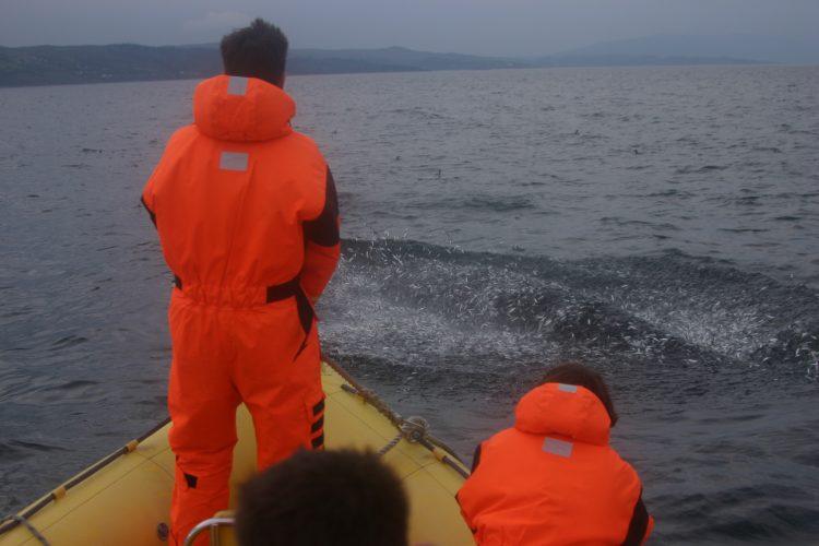Volunteers observing whale in Scotland