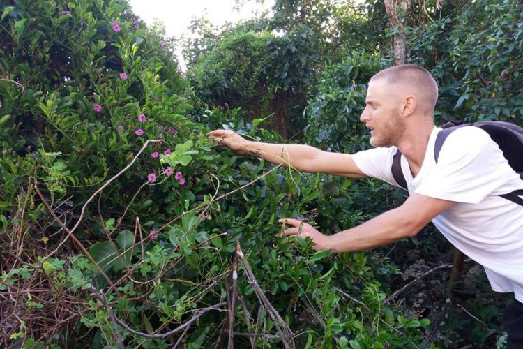 Conservation volunteer in foliage in the Caribbean