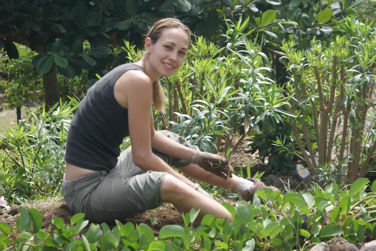 Conservation volunteer in botanical garden in St Eustatius