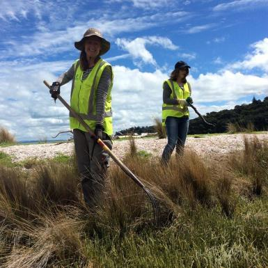 Conservation volunteer with rake in New Zealand