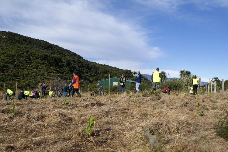 Conservation volunteers working in New Zealand