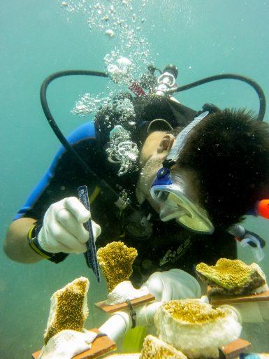 Caribbean Reef Diving | Volunteer in Carriacou | Working Abroad