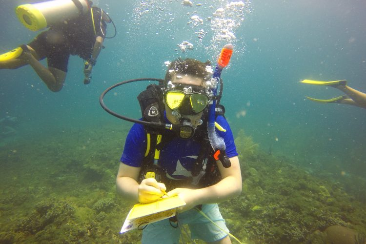 Diving in the Caribbean as a volunteer
