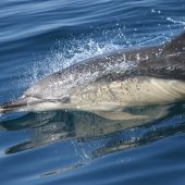 Whale and Dolphin Conservation Volunteer Project, Hebrides