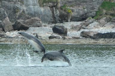 alttagVolunteer Scotland | Marine Conservation Volunteer | Working Abroad