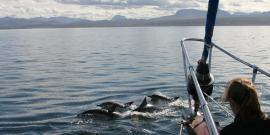 Common dolphins swimming in front of boat