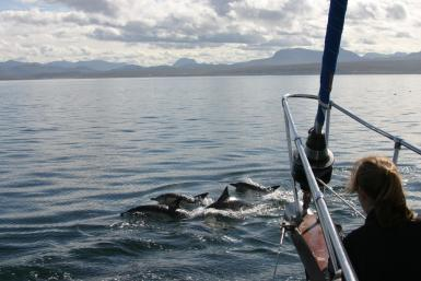 alttagVolunteer Hebrides | Dolphin Whale Conservation | Working Abroad