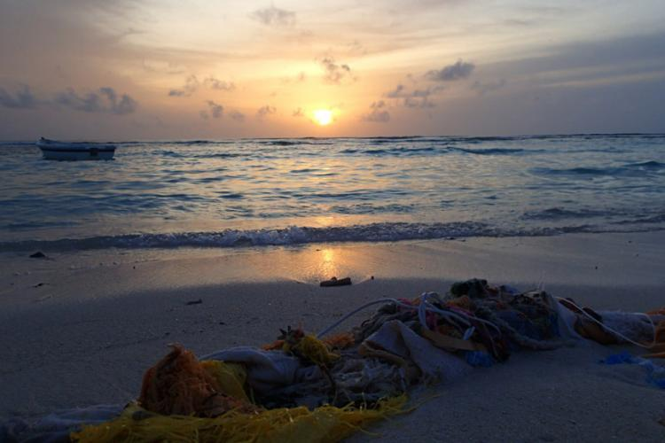 Volunteer Maldives | Marine Conservation | Working Abroad