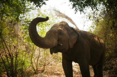 Elephant having dust bath in Thailand