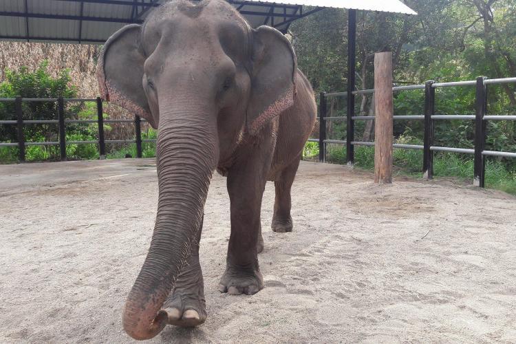 Elephant in night enclosure Thailand