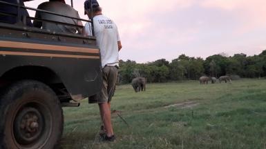 Elephant observations