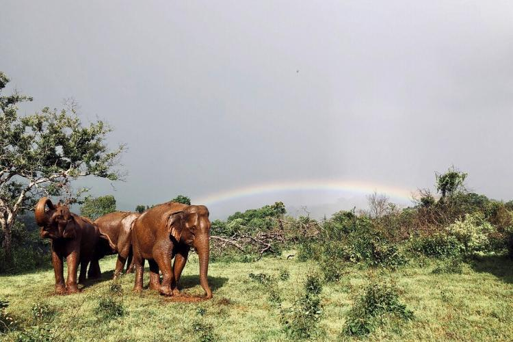 Elephants and rainbow