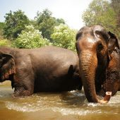 Elephant Volunteer Project, Thailand