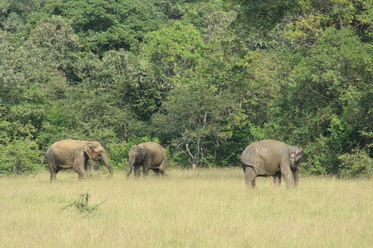 Elephants on the plains