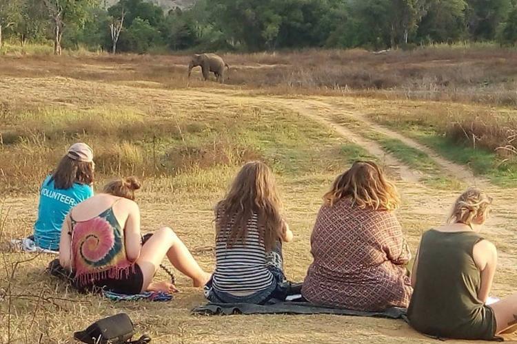 Evening observation of elephants