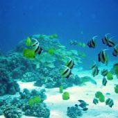 Lagoon Monitoring Intern, Mauritius