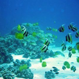 Marine conservation volunteering in Mauritius