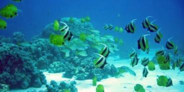 Marine conservation volunteering in Mauritius