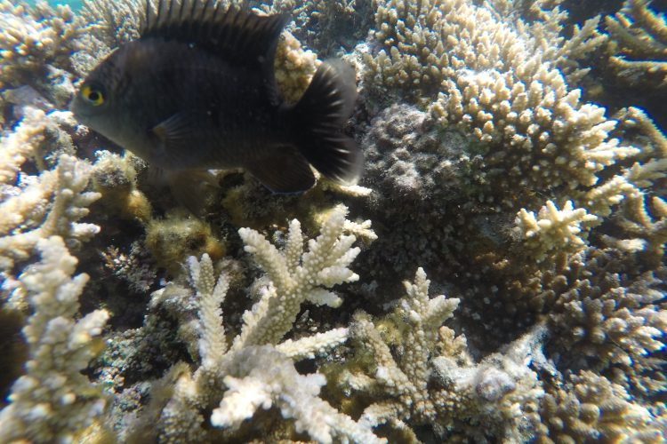 Coral reef monitoring in Mauritius