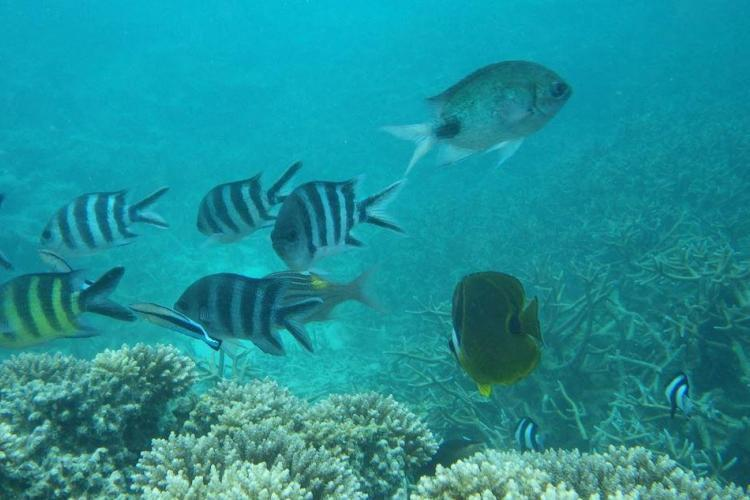 Fish research for volunteers in Mauritius