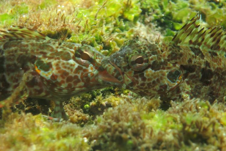 Fish underwater in Galapagos Islands