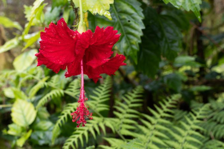 Red flower in Galapagos