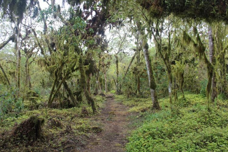 Forest path in Galapagos