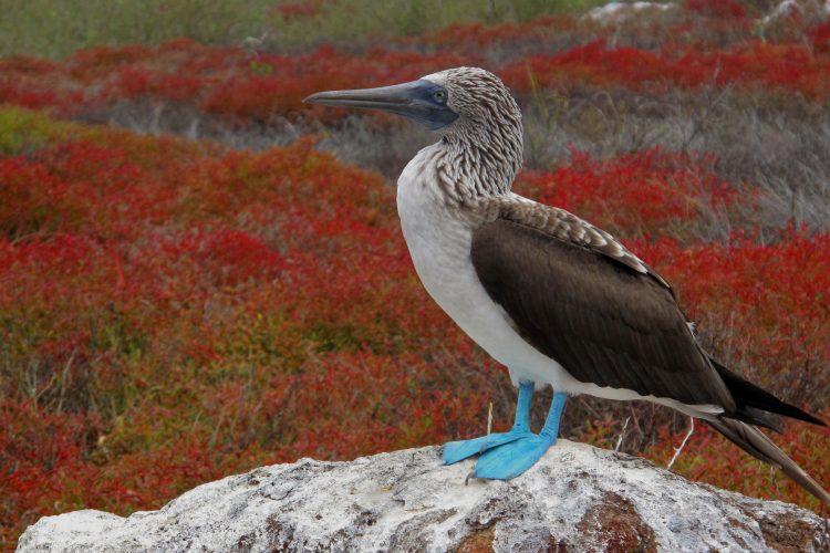 Galapagos bird perched on a rock