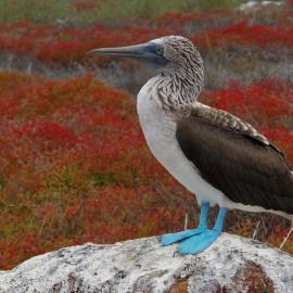 Galapagos bird perched on a rock