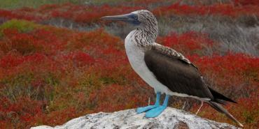 About the Galapagos Islands