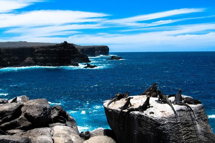 Iguanas on coastal rocks in Galapagos