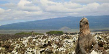 Iguana on rocks in Galapagos